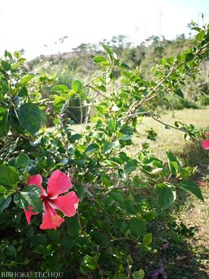 2012年末沖縄 072.jpg