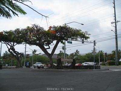 2013ハワイ島 240.jpg
